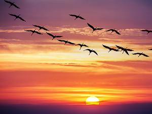 birds-in-flight_shutterstock_138350432_300tb